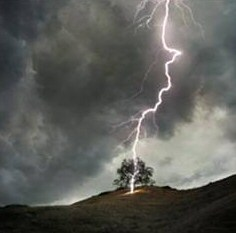 lightning_tree_oak